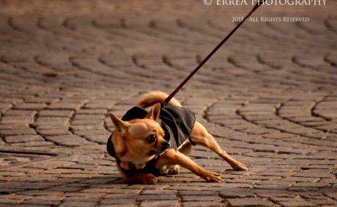 Erica Tonolli - Pet Photography Verona