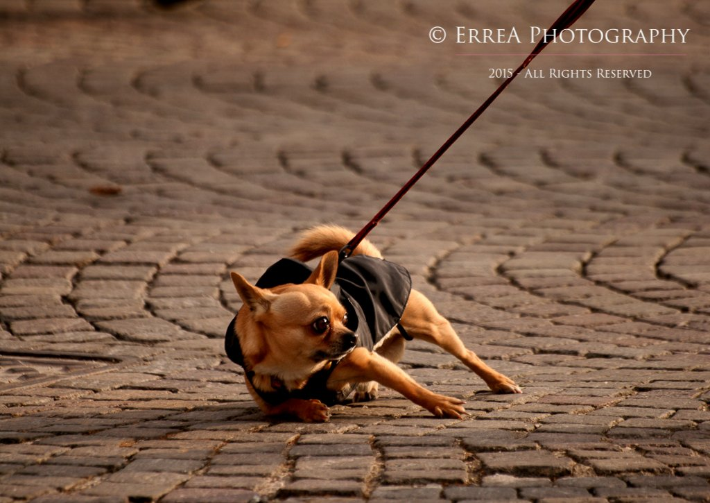 Erica Tonolli - Pet Photography Verona